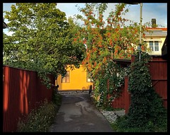The Dalkulle Alley (halleluja2014) Tags: summer alley afternoon sweden september dalarna falun gränd falurött östanfors dalkullegränd swedishlook yellowwall falured falunred garden trädgård