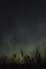 Harvest Lights (DustinGinetz.Photography) Tags: auroraborealis northernlights solar wind storm dark sky night farm aurora green