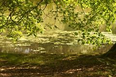 .. and the world is green! (Elisafox22) Tags: lens sony a58 135mmf28 meyeroptik bokehmonster meyeroptikorestor elisafox22 tree leaves outdoors scotland aberdeenshire loch fyvie vintagelens fyviecastle 15blade lochsidewalk elisaliddell©2019 tistheseason