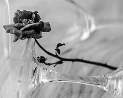 Wine and roses (risaclics) Tags: crazy tuesdays black white petals pink rose roses stilllife 60mmmacro august2019 nikond610d glasses wine crazytuesdays blackandwhite