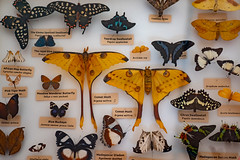 Madagascar Butterfly Collection