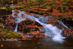 Water, Leaves, and Moss (DTB_5232) (masinka) Tags: syria virginia unitedstates etbtsy usa shenandoah national park nationalpark hike trail creek rose river outdoors cascade waterfall autumn fall season colors foliage leaves nature peaceful quiet relaxation