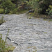 Columbus Limestone (Middle Devonian; North Side Quarry, Kelleys Island, Lake Erie, Ohio, USA) 29