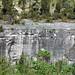 Columbus Limestone (Middle Devonian; North Side Quarry, Kelleys Island, Lake Erie, Ohio, USA) 43