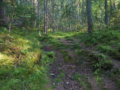 Romsåsen (mtbboy1993) Tags: norway forest norge rocks roots trail skog sti østfold askim rawtherapee indreøstfold romsåsen kykkelsrud sonycameraapp