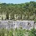 Columbus Limestone (Middle Devonian; North Side Quarry, Kelleys Island, Lake Erie, Ohio, USA) 42