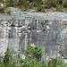 Columbus Limestone (Middle Devonian; North Side Quarry, Kelleys Island, Lake Erie, Ohio, USA) 44