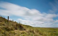 Photo of Windswept