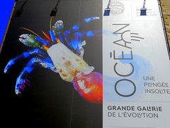OCEAN une plongée insolite (Raymonde Contensous) Tags: paris muséumhistoirenaturelle mnhn expositions oceanuneplongéeinsolite grandegalerieévolution science affiche j jardindesplantes