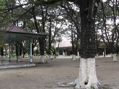 Trees in palace grounds at Mangkunegaran Palace, Surakarta (philip.mallis) Tags: indonesia solo surakarta mangkunegaranpalace