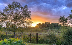 Garden Gate (nicklucas2) Tags: sunset sun sunburst gate cloud tree hill heath heather