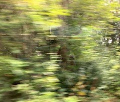 Time flies by (markshephard800) Tags: contemplating resting sleeping pensive thinking time journey reflections view train fast speed blurry blur trees green abstract