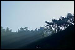 ... Wenn die ersten Sonnenstrahlen über den Berg blinzeln (tingel79) Tags: portugal camino tree baum wald forrest travel urlaub sonnig sonnenschein sonnenstrahlen sunshine berg mountain outdoor europa day nature natur landschaft landscape sonya6500 photographie photography photograph art foto sunbeams caminoportugues