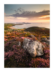 Colourful Clifftops (Dave Fieldhouse Photography) Tags: wales pembrokeshire clifftop cliff beach sunset summer heather wildflower rock seascape seaside evening coloud colour uk landscapephotography landscape fuji fujifilm fujixt2 wwwdavefieldhousephotographycom campsite carpark gorse island ramseyisland whitesands