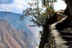 Hacia el puente del inca (unai.begiristain) Tags: puentedelinca trilha machupicchu perú