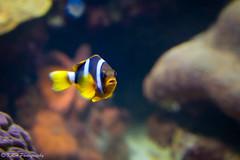 Just Swimmin' Along (KRHphotos) Tags: fish wildlife baltimore maryland nationalaquarium nature