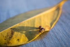 801A8517 (鹽味九K) Tags: 蜘蛛 canoneos5dmarkiv 台北 photography exploration tw