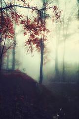 morning mist (Dyrk.Wyst) Tags: atmosphäre bergischesland bäume gegenlicht herbst landschaft licht natur nebel stimmung wald wuppertal atmosphere autumn backlight fall fog forest glow landscape leaves light mood mysterious nature peaceful silhouettes trees nordrheinwestfalen deutschland