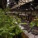 Red Star Train Graveyard #04 Urban Jungle
