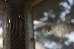 Au milieu de la toile (Katastrauff) Tags: nature urbex spider araignée toile web