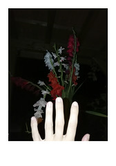 (Jordane Prestrot) Tags: ♍ jordaneprestrot nuit night noche hand mano main fleur flower flor glaïeul gladiolo gladiolus