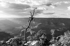 God's country (Janne Räkköläinen) Tags: grandcanyon nature naturelovers purenature hard alone stones creek sand dryland hardland canon6d canon canonphotography canonphotographing ef24105l godscountry us usa arizona blackwhite bw bnw amateur amateurphotography amateurphotographing outside outdoor ontheedge dry wood dead