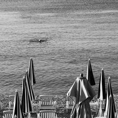 Just swimming by ... (John fae Fife) Tags: parasols fujifilmx noiretblanc swimmer bw nb alpesmaritime earlymorning morning beach monochrome swimming blackandwhite france nice xh1