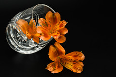 May I Pour You A Drink (Ann Kunz) Tags: nature flowers stilllife alstroemeria surreal abstract crystal