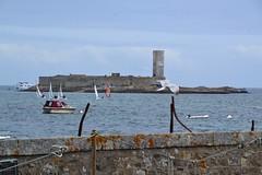 Glénant island - Fort Cigogne (Jeanne Menjoulet) Tags: glénant island britanny france île bretagne finistère fortcigogne fort