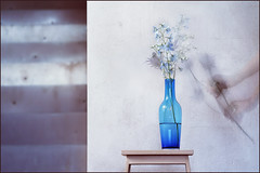 Hello blue. I have a companion for you. (Gudzwi) Tags: stillleben stilllebennichtganzstill blau vase schemel fusbank wand putz treppe treppenstufen metall blumen glockenblume distel blumenstraus violett zweidimensional drittelteilung hand halten geben textur oberfläche wasser spiegelung bewegung bewegungsunschärfe licht unschärfe verschwommen durchsichtig überlagert überlagerung kompositionausdreiaufnahmen hell spuren glas stilllife stilllifenotquitequiet blue stool footstool wall plaster stairway steps metal flowers bellflower thistle bunchofflowers violet twodimensional thirddivision hold give texture surface water reflection move motionblur light fuzziness blurred transparent overlapped overlay compositionfromthreeshots bright traces glass crazytuesday