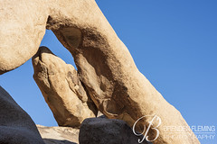 Arch Rock Joshua Tree National Park 1 (MrDiscoDucks) Tags: brenden fleming brendenfleming nikon d810 nikond810 2018 hiking hike adventure explore mrdiscoducks outdoors outdoor outside travel traveling landscape landscapes photo photography photographer nature paths sun sunny camping camp trail trails summer may 2019 joshua tree national park joshuatree nationalpark california arch rock archrock