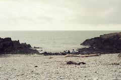 Sitting There (Bas Tempelman) Tags: gower peninsula wales united kingdom shore sea rocks stones cliffs bristol channel kodak portra 160 nikon f801s coast port eynon strand beach people sitting tree wood horizon