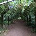 Arley Arboretum - Arch of The Elves