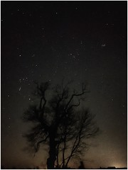 my favourite night sky view (Andy Stones) Tags: constellation orion hyades pleiades stars earthandspace space image imageof imagecapture photography photoof nightsky