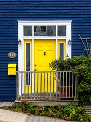 Bright Yellow Door (Karen_Chappell) Tags: yellow blue door house home city urban downtown nfld stjohns newfoundland atlanticcanada avalonpeninsula canada canonef24105mmf4lisusm architecture jellybeanrow rowhouse railing white trim wood wooden paint painted mailbox window street clapboard green plants reflections building