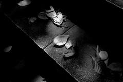 主菜 (main dish) (Dinasty_Oomae) Tags: olympusacee fomapan100 f56 1125sec 東京都 港区 東京 tokyo minatoku 櫻田神社 sakuradashrine 神社 shrine 葉 leaf 階段 steps 白黒写真 白黒 monochrome blackandwhite blackwhite bw outdoor
