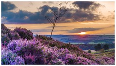 Sunset tree (jamesdewar99) Tags: landscape heather uplands hills light outdoorphotography nature scotland purple colour sky clouds sunset canon scenery view scenic fife