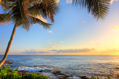 Paradise Cove Sunset - Kapolei, Hawaii (J.L. Ramsaur Photography) Tags: sunset sun sunrays sunlight sunglow orange yellow blue bluesky deepbluesky beautifulsky whiteclouds clouds sky skyabove allskyandclouds seascape oceanview seashore wherethemapturnsblue ilovethebeach ocean beach bluewater blueoceanwater sea waves pacificocean palmtree jlrphotography nikond7200 nikon d7200 photography photo oahuhi 25thanniversary honolulucounty hawaii 2019 engineerswithcameras islandsofhawaii photographyforgod hawaiianislands islandphotography screamofthephotographer ibeauty jlramsaurphotography photograph pic oahu tennesseephotographer oahuhawaii 25years anniversarytrip bucketlisttrip thegatheringplace 3rdlargesthawaiianisland 20thlargestislandintheunitedstates therainbowstate landscape hawaiianlandscape nature outdoors god'sartwork nature'spaintbrush god'screation beacheslandscapes