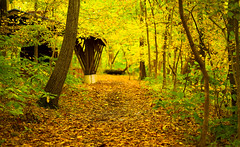 My Yellow Brick Road (Explored) (KC Mike Day) Tags: fall autumn yellow leaves green trail hiking nature old kate hike parkville missouri october
