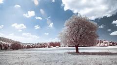 Summer or Winter? (Christoph Wenzel) Tags: deutschland sigma16mmf14dcdn sonyalpha6000 thüringen 720nm neuhausamrennweg landschaft infrarot natur sommer