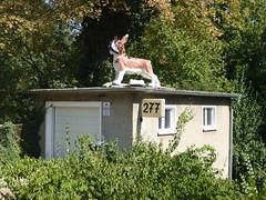 277 (mitue) Tags: berlin hund
