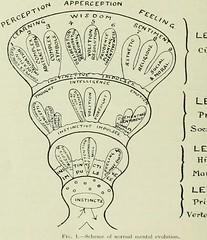 This image is taken from Page 316 of The Journal of neurology and psychopathology, 01-02 (Medical Heritage Library, Inc.) Tags: nervous system neurology psychology pathological gerstein toronto medicalheritagelibrary date1920 idjournalofneurolo01brit