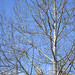 Pale Tree Contrast