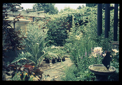 Mary Helen's Garden (Robert Drozda) Tags: portland oregon northportland arborlodge maryhelen garden film colorslide retrochrome400 colortransparency filmphotographyproject bluemooncamera 2019 drozda