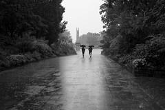 17:21 PM (TORYS TAKAO) Tags: batis240cf zeiss batis 240 cf batis240 emount rain