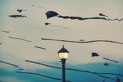 #kites #oceancity (citron_smurf) Tags: kites oceancity