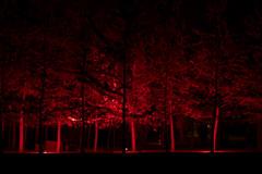 Há luz no parque 3 (j_m_m_r) Tags: haluznoparque serralves porto