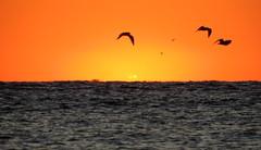 IMG_0010y (gzammarchi) Tags: italia paesaggio natura mare ravenna lidoadriano alba sole riflesso animale volo uccello stormo poesia haiku