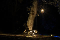 Há luz no parque 1 (j_m_m_r) Tags: haluznoparque serralves porto