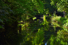 Basingstoke Canal St John's - Woking 1 September 2019 017 (paul_appleyard) Tags: basingstoke canal woking september 2019 reflections reflected water still calm peaceful